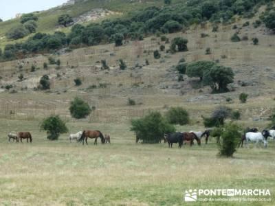 Dehesa de Fuentecuadrilla - grupos senderismo; bastones de trekking